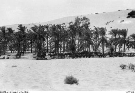 10th Light Horse concealed and shaded by an oasis near Romani 1916. Photographer unknown photograph source AWM I02650A