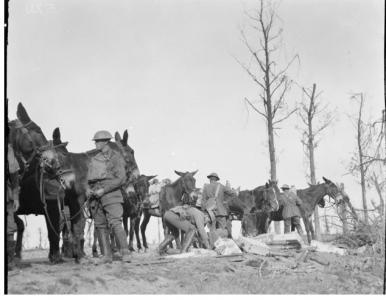 1st DAC 19.9.1917 transporting ammunition to Birr Cross Road at Ypres. Photographer unknown, photograph source AWM E0073