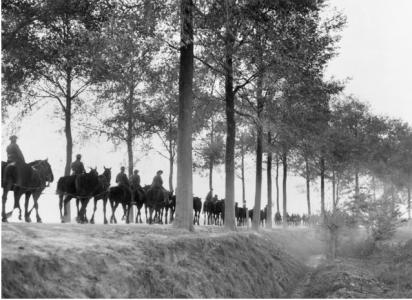 Artillery Horses on the road between Popperhinge and Ypres.1917. Photographer unknown, photograph source E00827