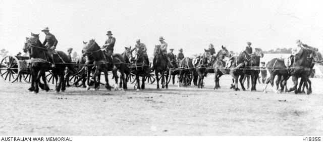 Artillery Training at Broadneadows Vic. Photographer unknown, photograph AWM H18355
