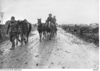 Australian Artillery pack horses in France. Photographer unknown, photograph source AWM E00090