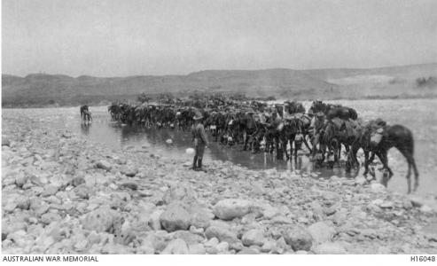 Australian Light Horsemen watering Horses enroute for Beersheba. Photographer unknown, photograph sourced AWM H160