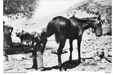 Light Horse Farrier in Jordan. Photographer unknown, photograph sourced from AWM B02843