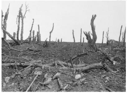 Ruined gardens at Pozieres 1916. Official British War photograph, photograph source AWM EZ0097