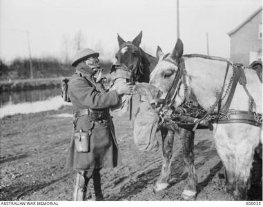 Soldier and horses with gas masks 1918. Photographer unknown, photograph source AWM K00035